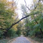 abandonedroads6
